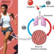 Ejercicio y respiración