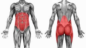 Core: Los estabilizadores que protegen tu espalda